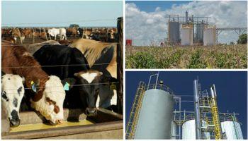 Energía y alimento con maíz en origen: un desarrollo 100% cordobés