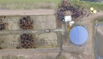 Nuevo impulso para la energía eléctrica con el estiércol de las vacas
