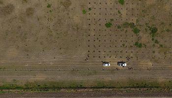 Forestación: una red de ensayos inédita en Cordoba ya sembró más de 14 mil ejemplares