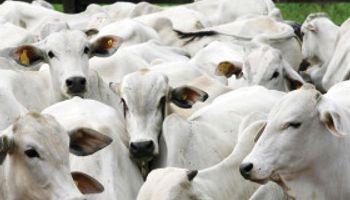 Proteina animal: crecen envíos de Brasil a Rusia