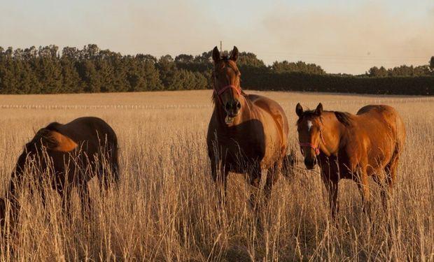 Alerta sanitaria por el herpesvirus equino: qué es la enfermedad viral que amenaza a los caballos