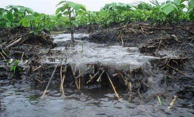 """En las lluvias importantes, el agua que """"corre"""" lava la materia orgánica y se reduce la fertilidad del suelo, si no se toman medidas"""