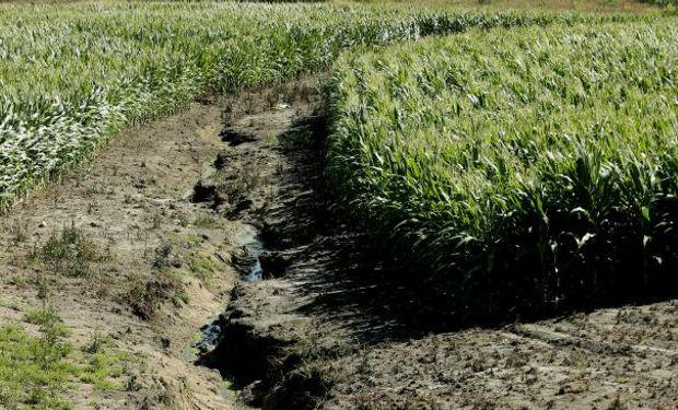 La siembra directa y el manejo del suelo reducen el efecto de la erosión (LaVoz).