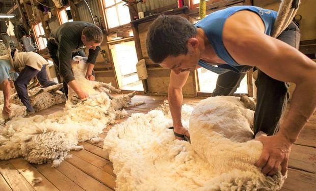Fijan nuevos salarios mínimos para el arreo de ganado, cultivo de hongos, esquila y cosecha de papas