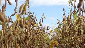 La política cambió la estacionalidad de la cosecha