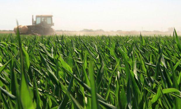 Deterioro de la condición de la soja y el maíz