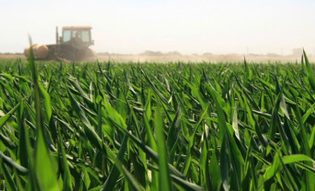 EEUU: Se cosechó el 11% de la soja