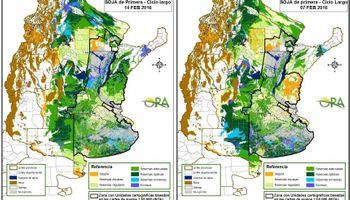 Las lluvias no alcanzaron para revertir déficit hídrico en soja