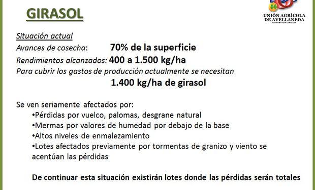 Estado del cultivo de girasol. Fuente: UAA