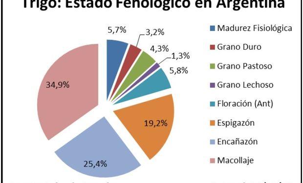 Estado fenológico del cultivo de trigo. Fuente: BCBA.