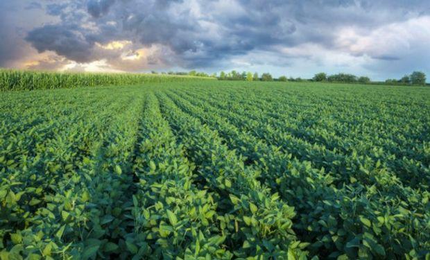 En la semana cerrada al 23 de julio el estado buenos y excelente de los cultivos estadounidenses volvió a deteriorarse.