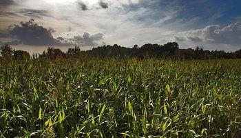 Estados Unidos triplica el área sembrada en la Argentina