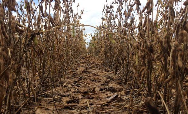 La cosecha logró avanzar en Mato Grosso.