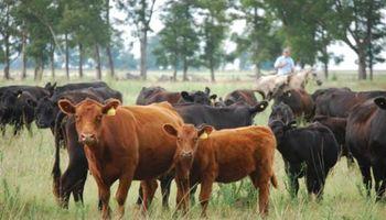 Estrés calórico: cómo evitar la mortandad de animales con un buen manejo