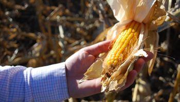 Bioetanol: la industria apuesta a un corte del 27% con el precio en un mínimo histórico