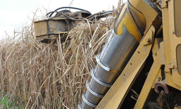 El etanol elaborado a partir de caña de azúcar –gracias al efectivo lobby de la industria azucarera– registró una reducción de precio del 9,7%.