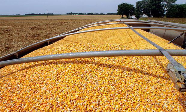 La previsión de la FAO respecto de las existencias mundiales de cereales se sitúa en 628 millones de toneladas, el nivel más alto desde 2000.