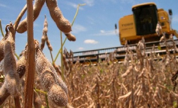 USDA: los analistas esperan en el reporte del jueves una reducción de 2,5 millones de toneladas de soja para Argentina.
