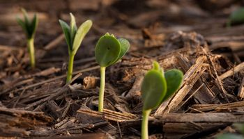 Bajas para la soja: presiona la expectativa de una gran cosecha