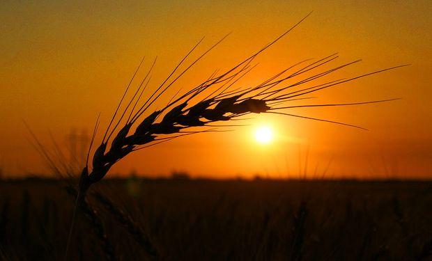 El Gobierno compartió su expectativa para la siembra de trigo 2021/22