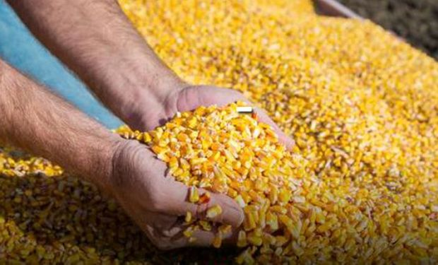 Se presenta el martes: qué espera el mercado de granos para un importante informe