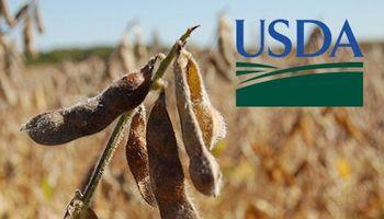 Detalle de las expectativas en la previa al informe trimestral del USDA