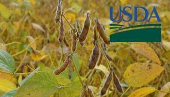 Expectativas de cara a un nuevo Reporte del USDA