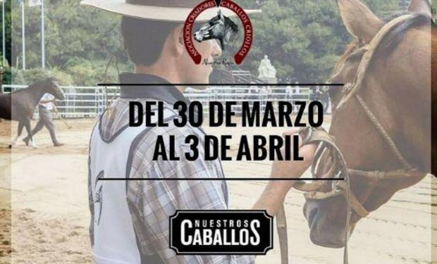 """Exposición """"Nuestros caballos"""" comienza hoy."""