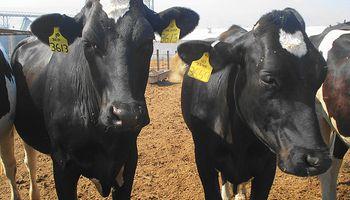 Una mirada a la ganadería en Expoagro 2014