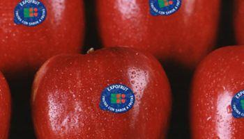 Crisis de la fruta: la principal firma exportadora cierra una planta en Río Negro