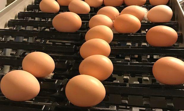 """""""Venimos del quinto subsuelo"""": sin retenciones, los productores de huevo quieren quintuplicar las exportaciones"""
