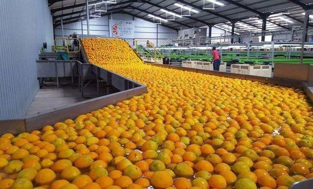 Cítricos y nueces: Argentina abrió un nuevo mercado y exportará a Perú