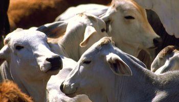 Paraguay gana lugar en mercado de carne bovina