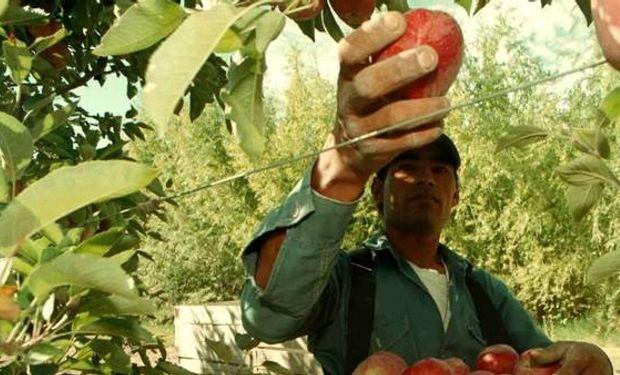La cosecha de este año caerá entre 30% y 50%.