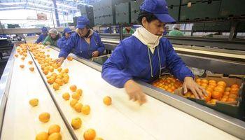 Exportación de frutas a Brasil: sigue la evaluación