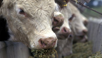 En Uruguay ven números ajustados para exportar carne a Argentina