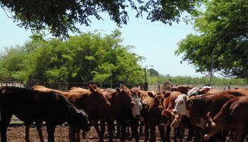 ARU: es importante que haya exportación de ganado en pie