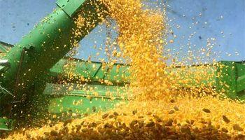 Abre la inscripción para las empresas que quieran exportar maíz, sorgo, soja y cebada a China