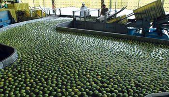 Las exportaciones de limón a EE.UU. comenzarán en 2018