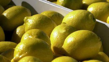 Los limones argentinos regresaron al mundo: exportación creció un 75%
