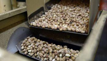 Oportunidad para exportadoras: abren registro de cuota de maní, pasta de maní y tabaco a EE.UU.