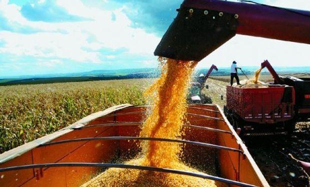 Cae la exportación de maíz en Argentina