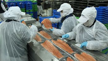 Exportaciones chilenas de salmón superaron en 350% a las colocaciones argentinas de carne vacuna