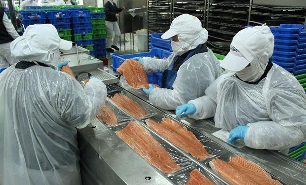 Las exportaciones chilenas de salmón generaron un volumen de divisas 350% superior a las colocaciones de cortes bovinos argentinos.