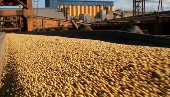 Soja: paso atrás de las ventas sudamericanas a China