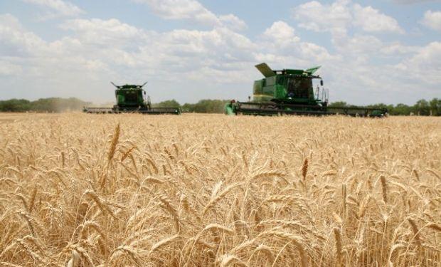 La exportación de trigo, ante un trimestre histórico.