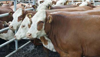 Se frenó la exportación de vacas gordas con destino a Brasil