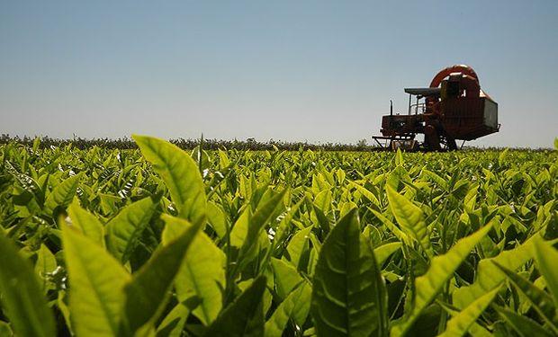 Advierten sobre un posible cierre de exportaciones de yerba