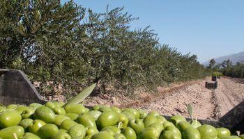 Cayeron las exportaciones de olivos, cítricos y vitivinícolas
