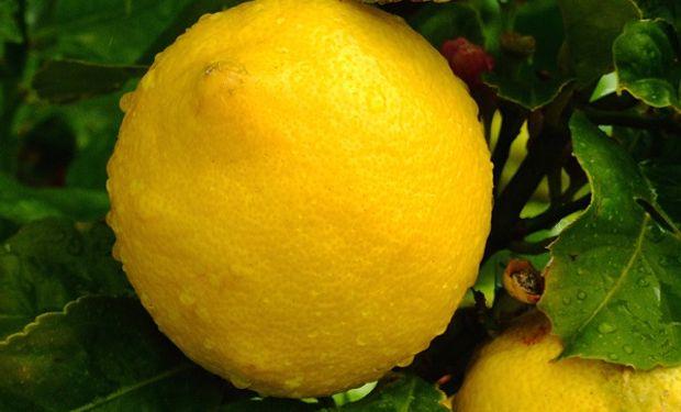 Por primera vez se exportaron limones, mandarinas y pomelos desde Buenos Aires